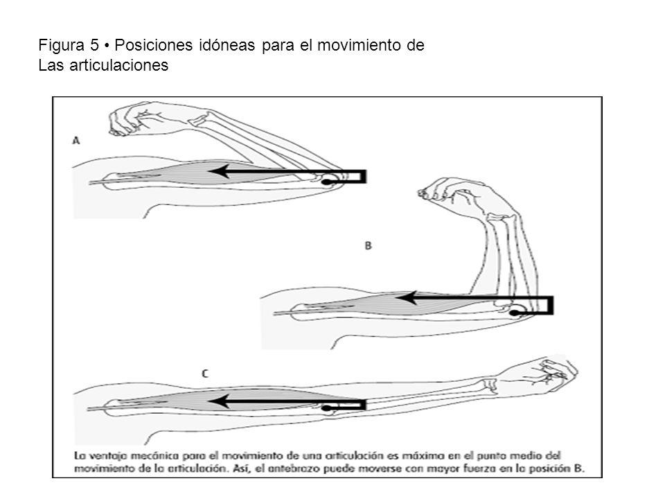 Figura 5 Posiciones idóneas para el movimiento de Las articulaciones