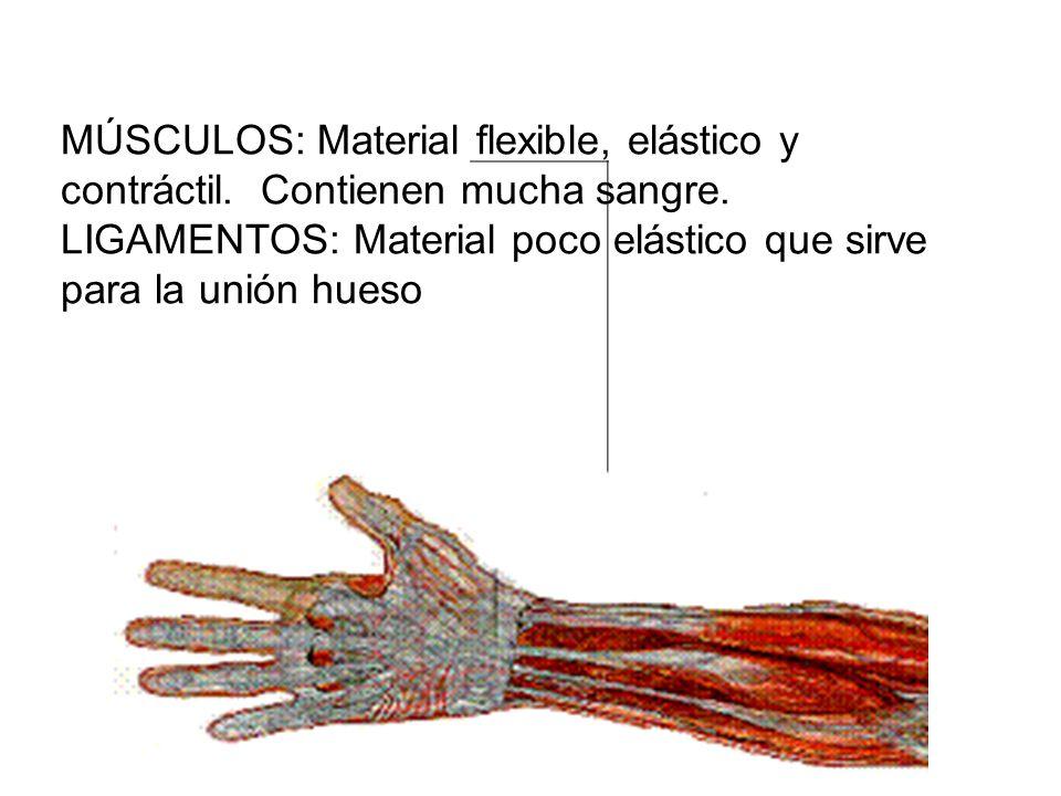 MÚSCULOS: Material flexible, elástico y contráctil. Contienen mucha sangre. LIGAM ENTOS : Materi al poco elástic o que sirve para la unión hueso MÚSCU