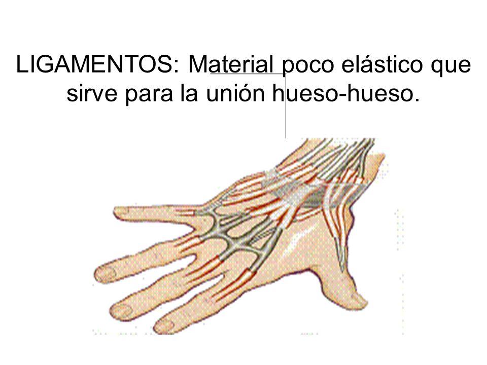 LIGAMENTOS: Material poco elástico que sirve para la unión hueso-hueso. LIGAMENTOS: Material poco elástico que sirve para la unión hueso-hueso.