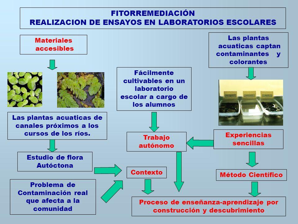 FITORREMEDIACIÓN Y BACTERIAS MINERAS EN LOS LABORATORIOS ESCOLARES