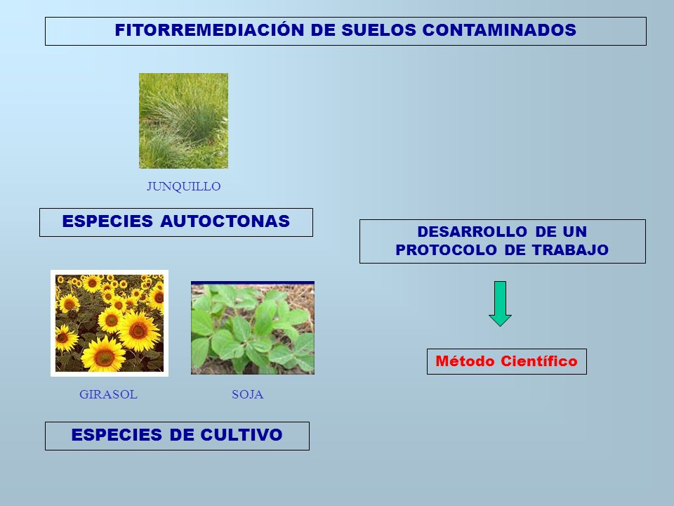 Recolección y caracterización de especies vegetales acuáticas de cuencas hídricas que surcan el gran Buenos Aires. FITORREMEDIACIÓN DE AGUAS CONTAMINA