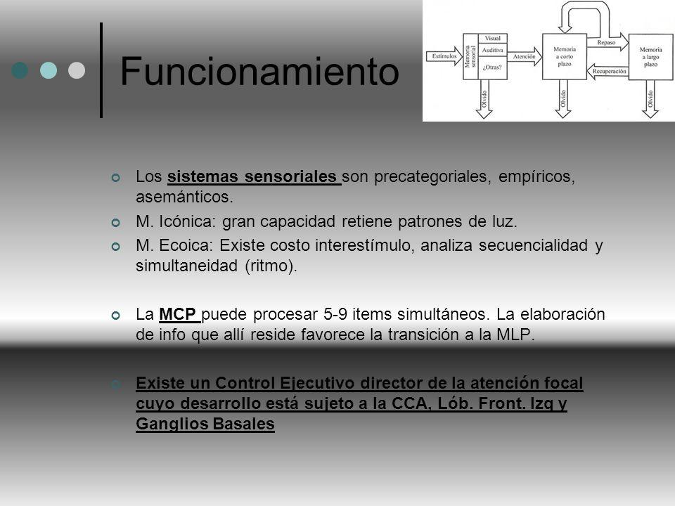 Funcionamiento Los sistemas sensoriales son precategoriales, empíricos, asemánticos. M. Icónica: gran capacidad retiene patrones de luz. M. Ecoica: Ex