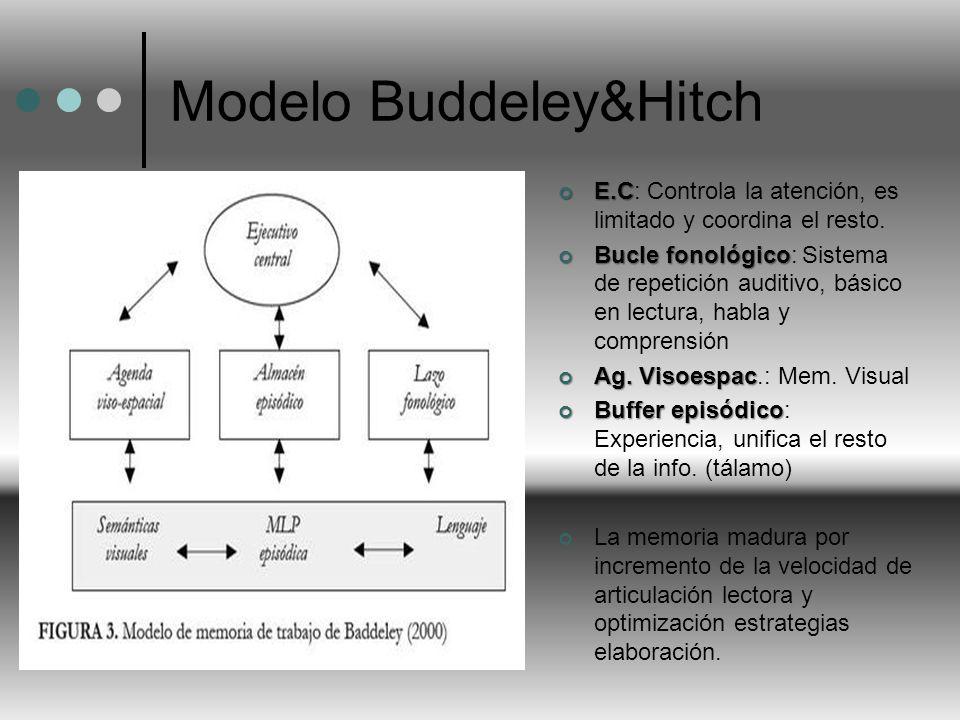 Modelo Buddeley&Hitch E.C E.C: Controla la atención, es limitado y coordina el resto. Bucle fonológico Bucle fonológico: Sistema de repetición auditiv