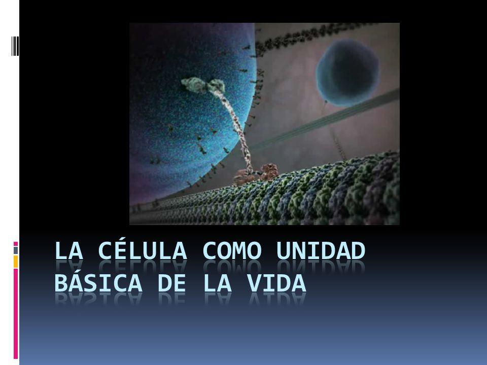 INTRODUCCIÓN El estudio de la célula es indispensable para comprender las relaciones de la celulares.
