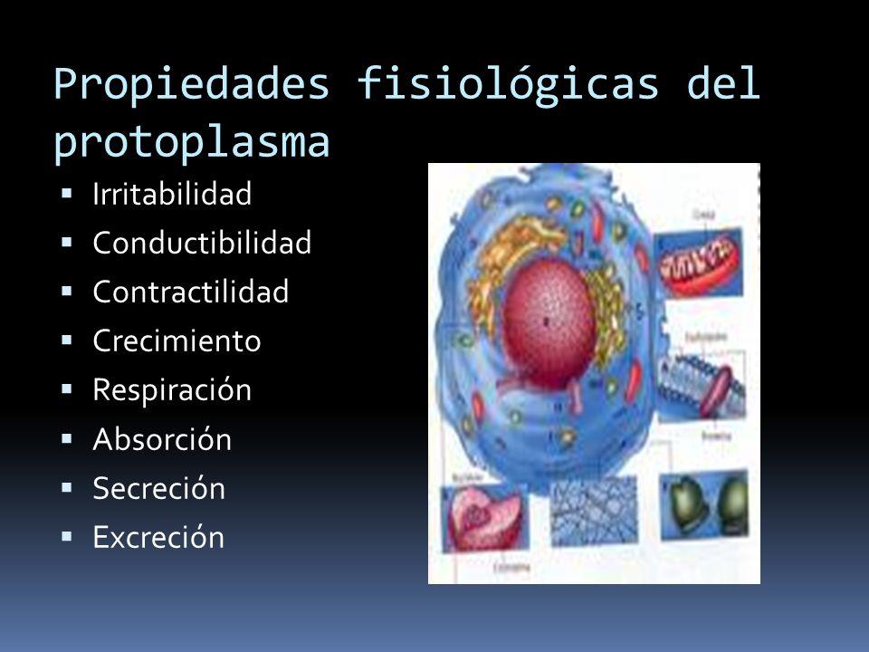 Propiedades fisiológicas del protoplasma Irritabilidad Conductibilidad Contractilidad Crecimiento Respiración Absorción Secreción Excreción