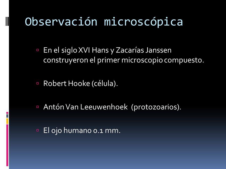Observación microscópica En el siglo XVI Hans y Zacarías Janssen construyeron el primer microscopio compuesto. Robert Hooke (célula). Antón Van Leeuwe
