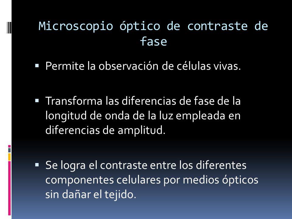 Microscopio óptico de contraste de fase Permite la observación de células vivas. Transforma las diferencias de fase de la longitud de onda de la luz e