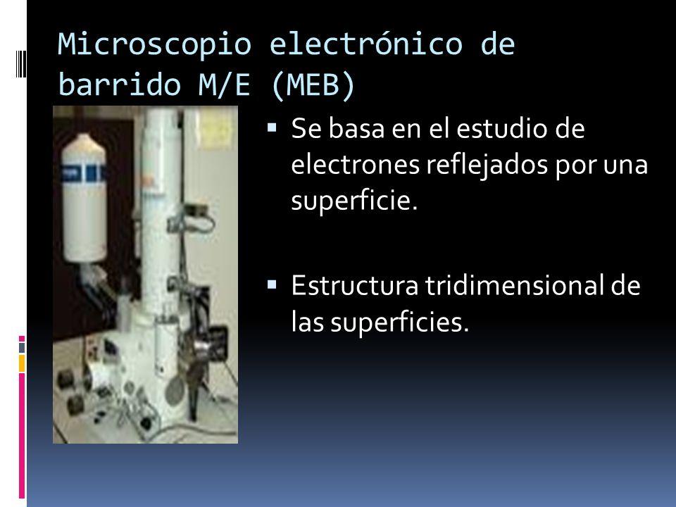 Microscopio electrónico de barrido M/E (MEB) Se basa en el estudio de electrones reflejados por una superficie. Estructura tridimensional de las super