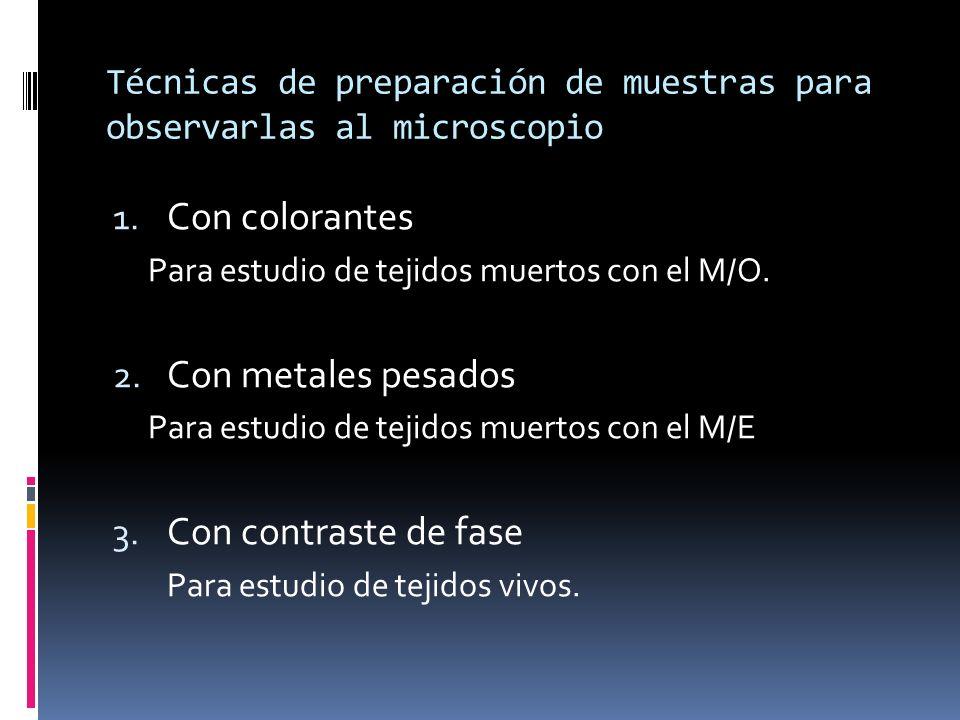 Técnicas de preparación de muestras para observarlas al microscopio 1. Con colorantes Para estudio de tejidos muertos con el M/O. 2. Con metales pesad