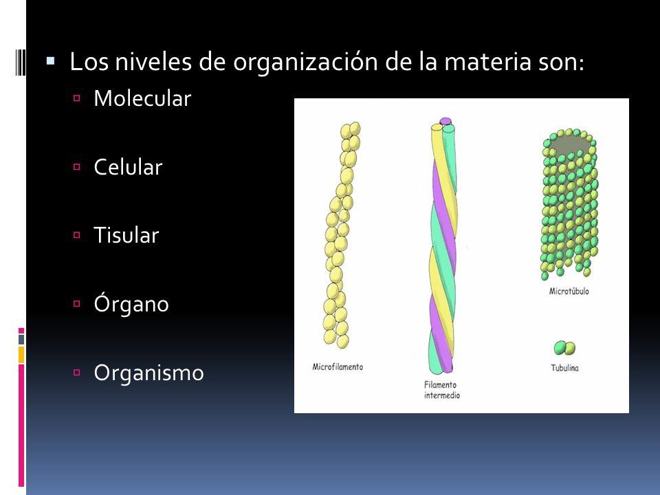 Los órganos son agrupaciones de tejidos.
