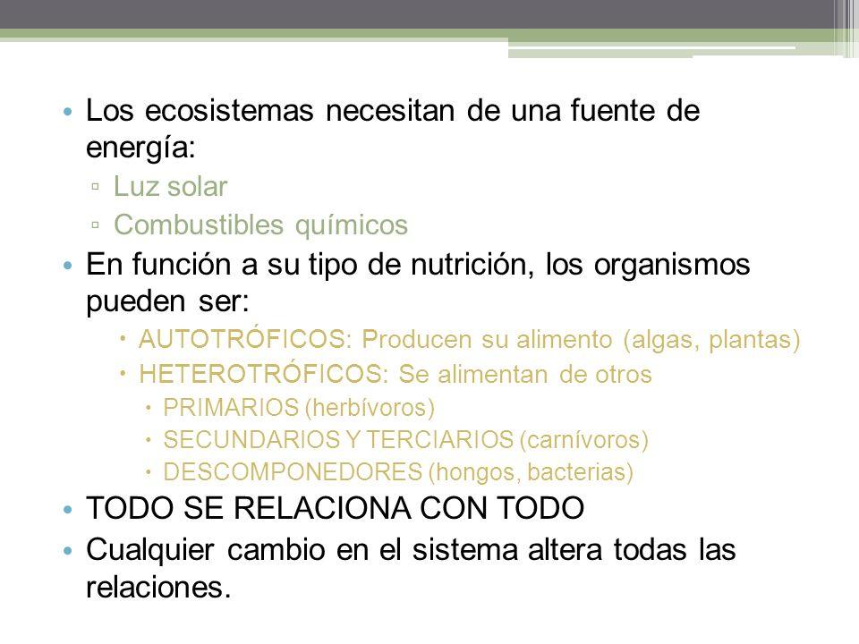Los ecosistemas necesitan de una fuente de energía: Luz solar Combustibles químicos En función a su tipo de nutrición, los organismos pueden ser: AUTOTRÓFICOS: Producen su alimento (algas, plantas) HETEROTRÓFICOS: Se alimentan de otros PRIMARIOS (herbívoros) SECUNDARIOS Y TERCIARIOS (carnívoros) DESCOMPONEDORES (hongos, bacterias) TODO SE RELACIONA CON TODO Cualquier cambio en el sistema altera todas las relaciones.