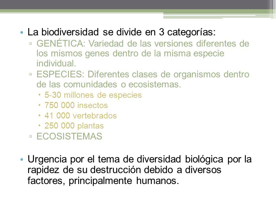 La biodiversidad se divide en 3 categorías: GENÉTICA: Variedad de las versiones diferentes de los mismos genes dentro de la misma especie individual.