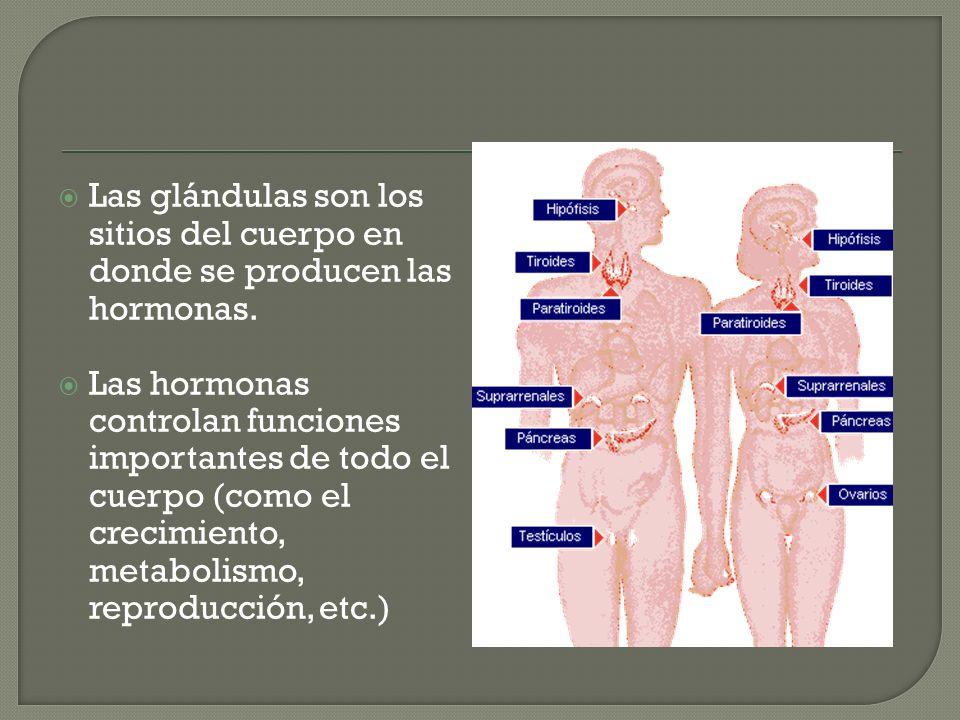 Las glándulas son los sitios del cuerpo en donde se producen las hormonas. Las hormonas controlan funciones importantes de todo el cuerpo (como el cre