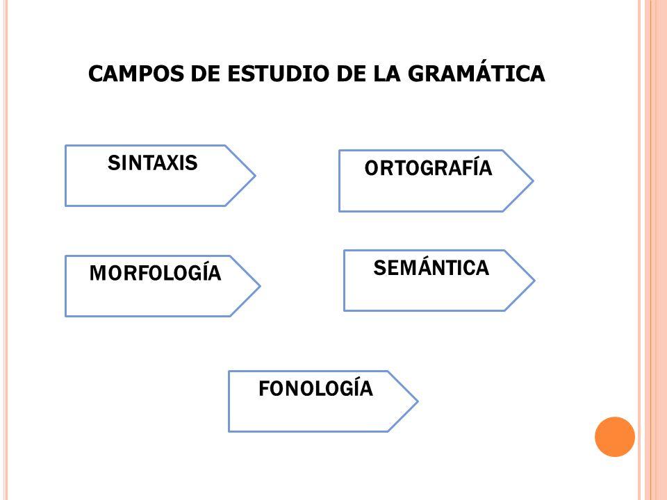 CAMPOS DE ESTUDIO DE LA GRAMÁTICA SINTAXIS MORFOLOGÍA SEMÁNTICA FONOLOGÍA ORTOGRAFÍA