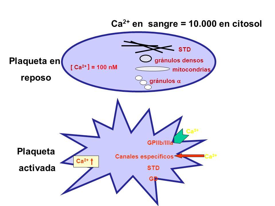 [ Ca 2+ [ = 100 nM Plaqueta en reposo Plaqueta activada STD gránulos densos mitocondrias gránulos Ca 2+ en sangre = 10.000 en citosol Ca 2+ Canales es
