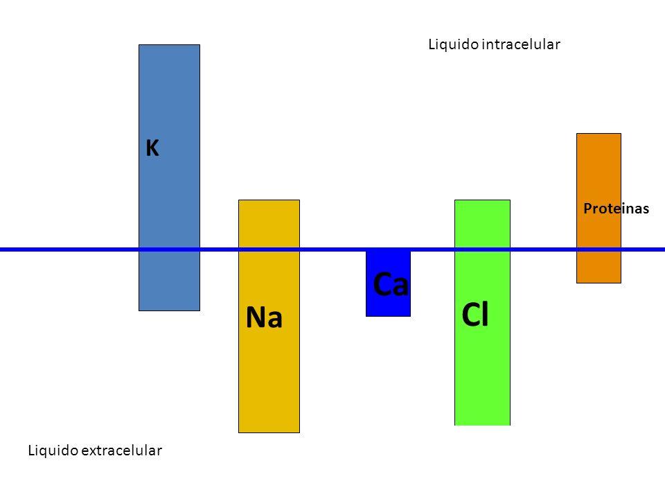 Liquido intracelular Liquido extracelular K Na Cl Ca Proteinas Liquido extracelular