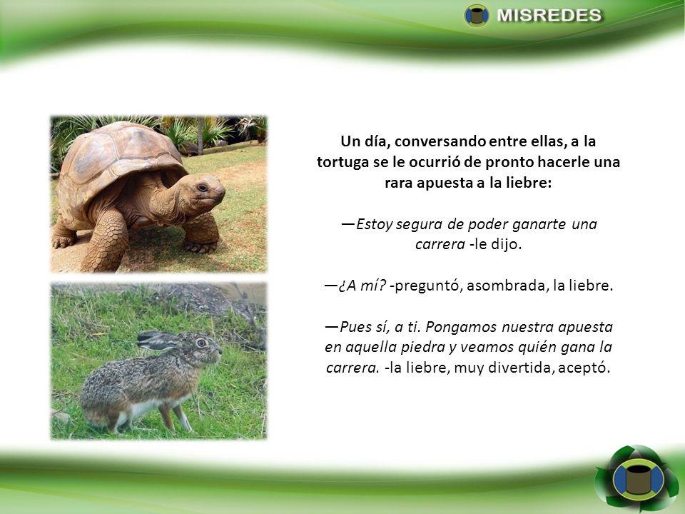 Un día, conversando entre ellas, a la tortuga se le ocurrió de pronto hacerle una rara apuesta a la liebre: Estoy segura de poder ganarte una carrera