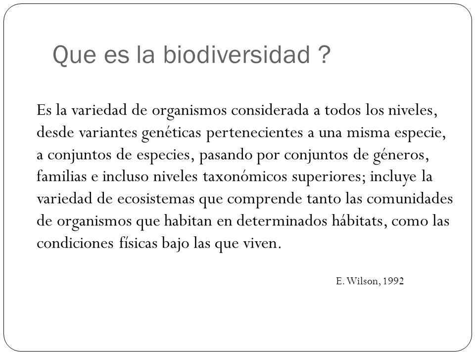 Que es la biodiversidad ? Es la variedad de organismos considerada a todos los niveles, desde variantes genéticas pertenecientes a una misma especie,
