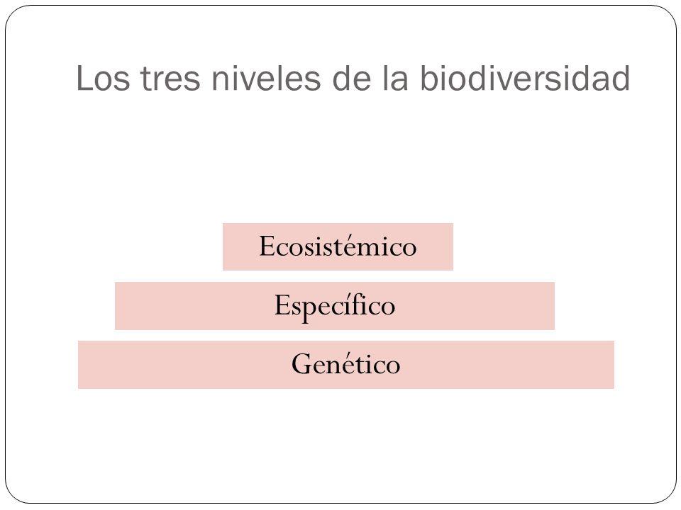 Tipos de diversidad Heterogeneidad espacial dentro de un ecosistema = diversidad beta.