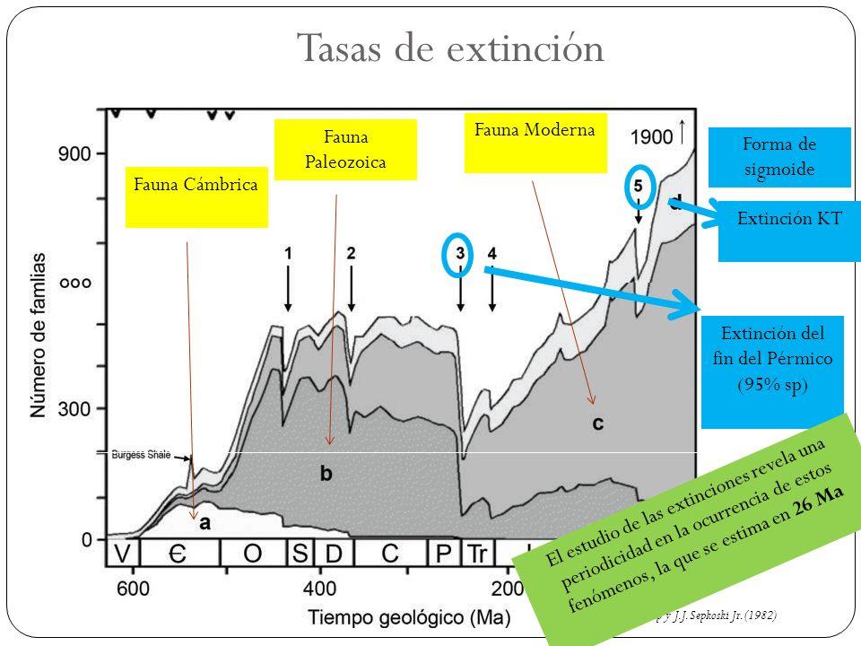 Tasas de extinción Raup y J.J. Sepkoski Jr. (1982) Fauna Cámbrica Fauna Paleozoica Fauna Moderna Forma de sigmoide Extinción del fin del Pérmico (95%
