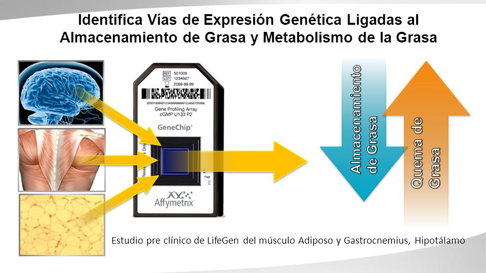 Identifica Vías de Expresión Genética Ligadas al Almacenamiento de Grasa y Metabolismo de la Grasa Estudio pre clínico de LifeGen del músculo Adiposo