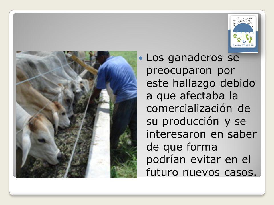 Los ganaderos se preocuparon por este hallazgo debido a que afectaba la comercialización de su producción y se interesaron en saber de que forma podrí
