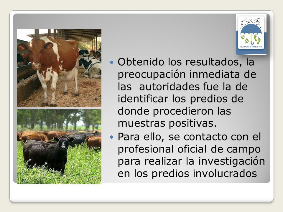Obtenido los resultados, la preocupación inmediata de las autoridades fue la de identificar los predios de donde procedieron las muestras positivas. P