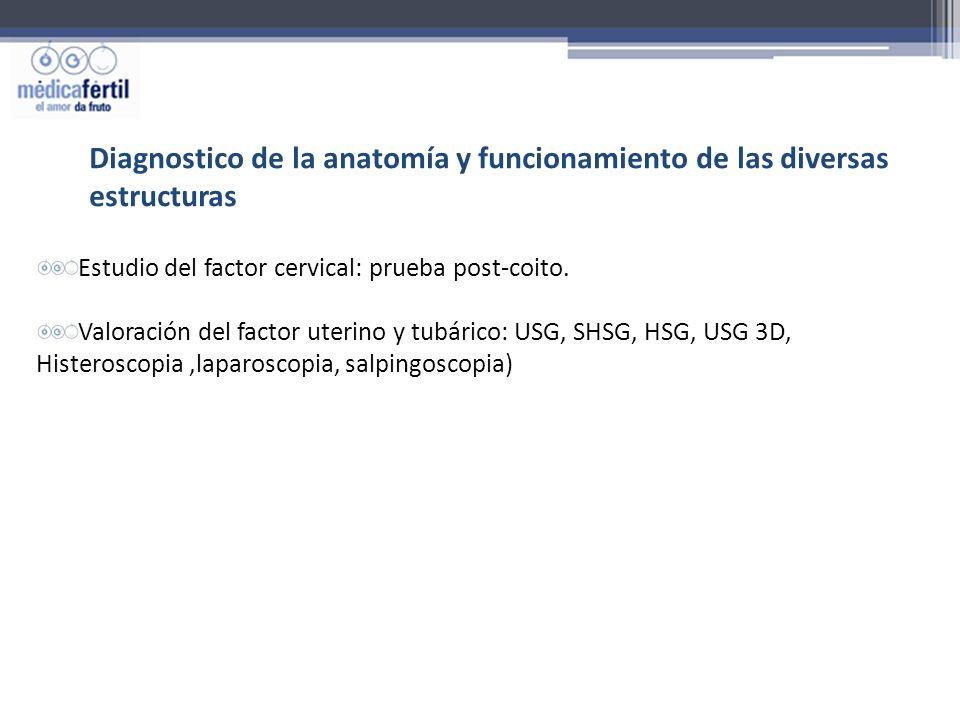 Diagnostico de la anatomía y funcionamiento de las diversas estructuras Estudio del factor cervical: prueba post-coito. Valoración del factor uterino