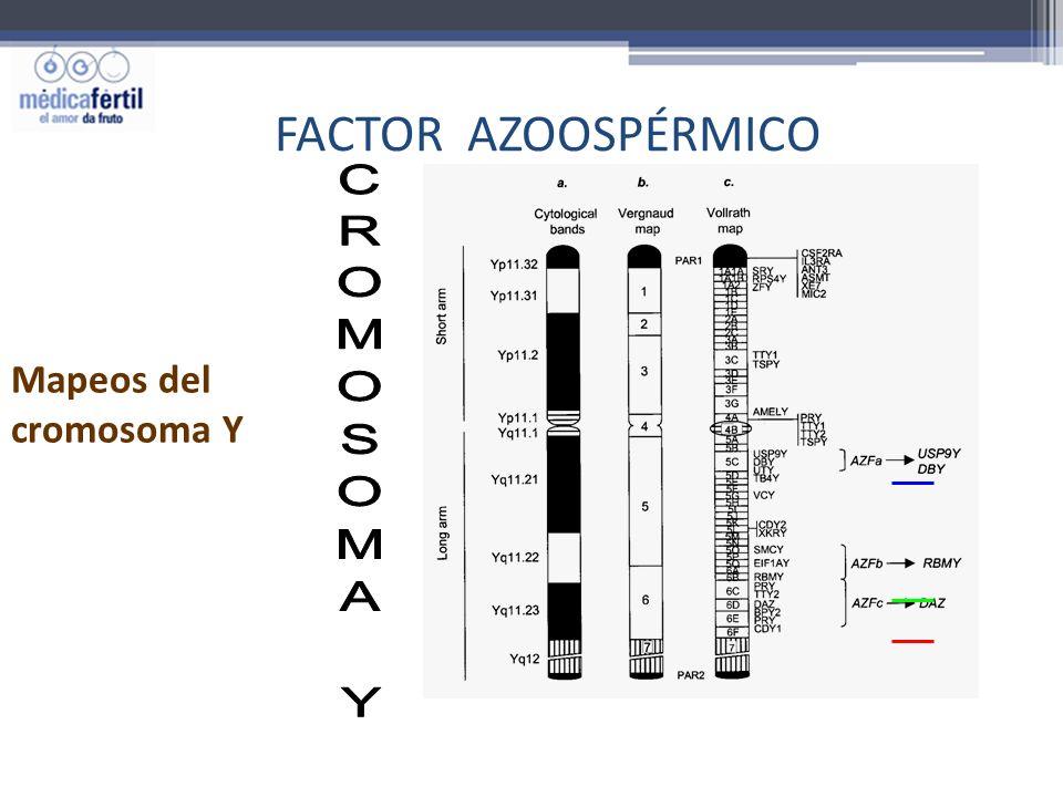 FACTOR AZOOSPÉRMICO Mapeos del cromosoma Y