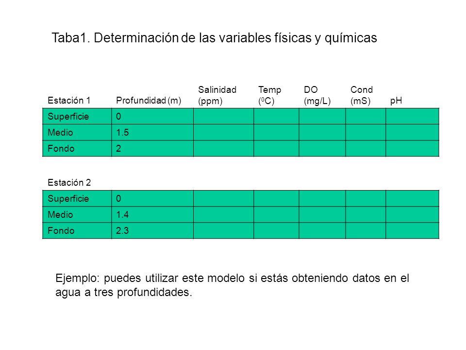 Estación 1Profundidad (m) Salinidad (ppm) Temp ( 0 C) DO (mg/L) Cond (mS)pH Superficie0 Medio1.5 Fondo2 Estación 2 Superficie0 Medio1.4 Fondo2.3 Taba1