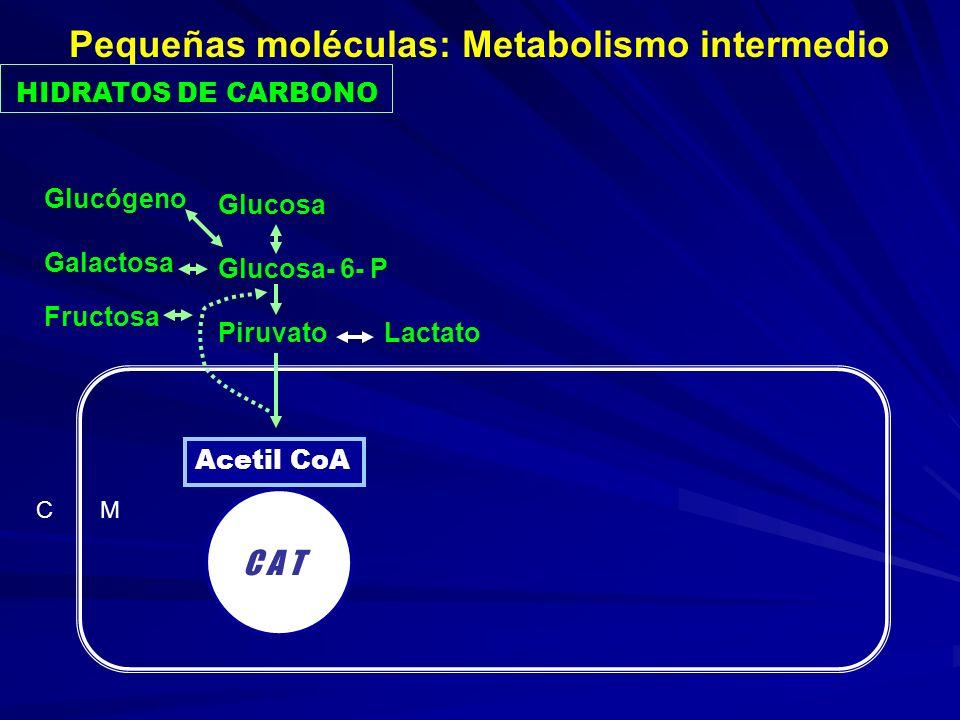 HIDRATOS DE CARBONO C M C A T Acetil CoA Glucosa Glucosa- 6- P Piruvato Lactato Glucógeno Galactosa Fructosa Pequeñas moléculas: Metabolismo intermedi