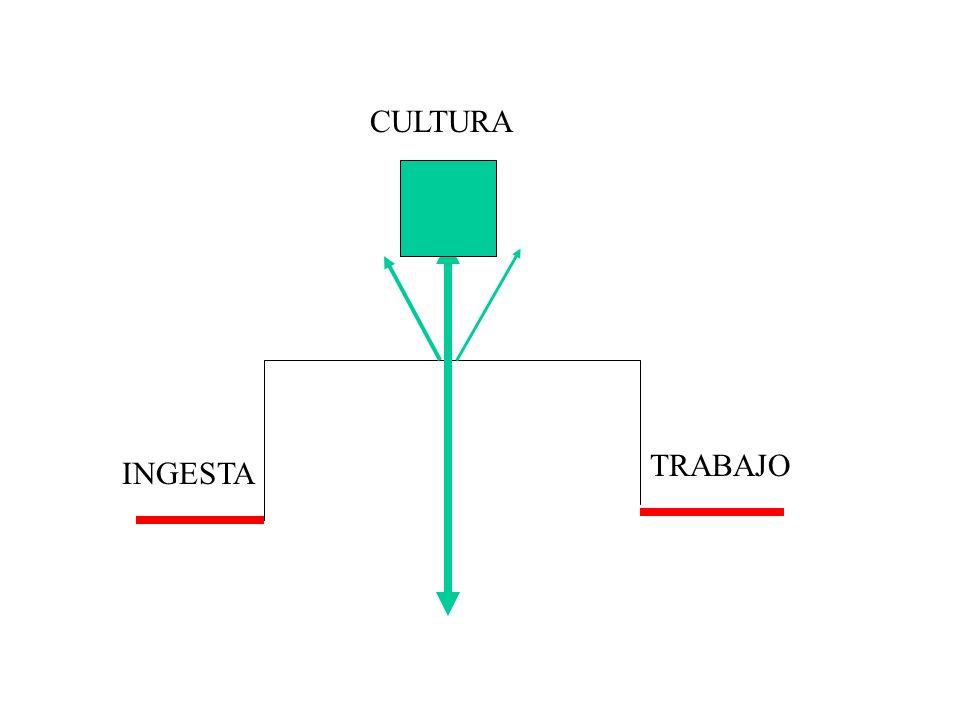 INGESTA TRABAJO CULTURA