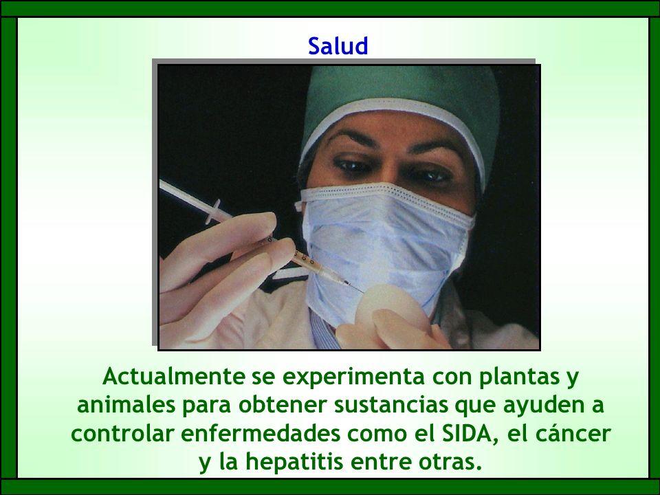 Salud Actualmente se experimenta con plantas y animales para obtener sustancias que ayuden a controlar enfermedades como el SIDA, el cáncer y la hepatitis entre otras.