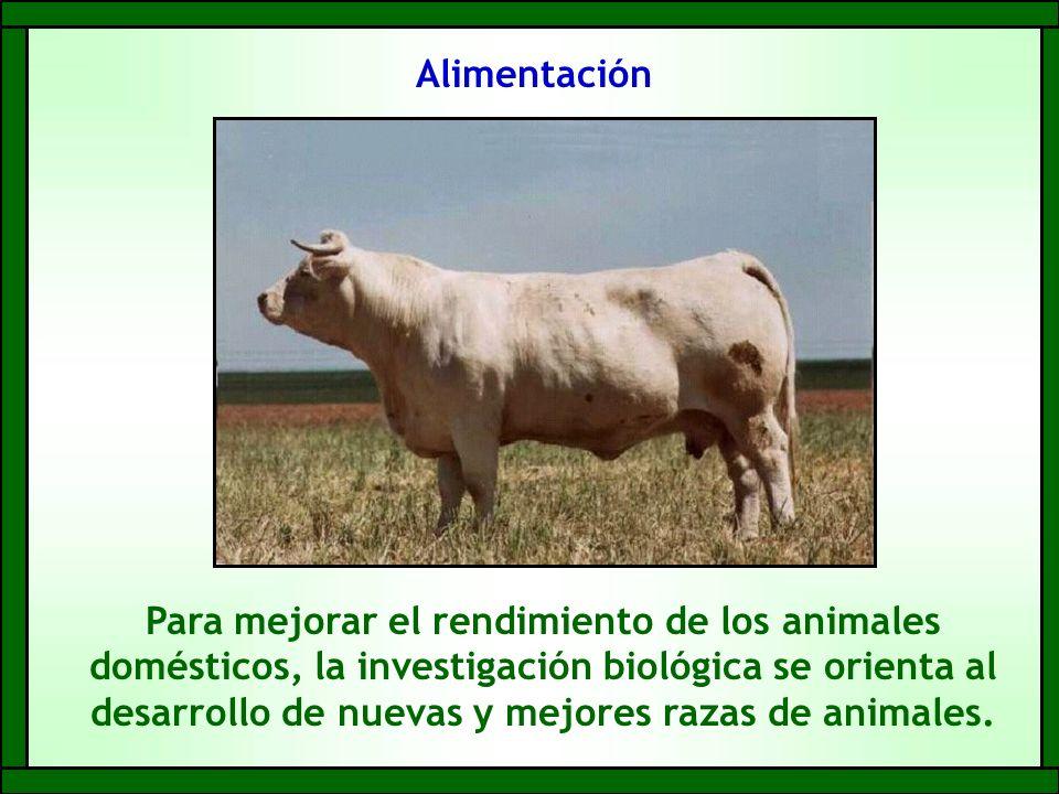 Alimentación Para mejorar el rendimiento de los animales domésticos, la investigación biológica se orienta al desarrollo de nuevas y mejores razas de animales.