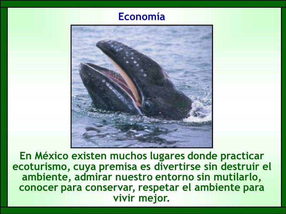 Economía En México existen muchos lugares donde practicar ecoturismo, cuya premisa es divertirse sin destruir el ambiente, admirar nuestro entorno sin mutilarlo, conocer para conservar, respetar el ambiente para vivir mejor.