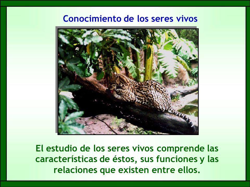 Conocimiento de los seres vivos El estudio de los seres vivos comprende las características de éstos, sus funciones y las relaciones que existen entre ellos.
