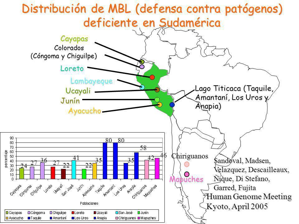 Cayapas Lambayeque Colorados Colorados (Cóngoma y Chiguilpe) Loreto Junín Ucayali Ayacucho Lago Titicaca (Taquile, Amantaní, Los Uros y Anapia) Mapuches Distribución de MBL (defensa contra patógenos) deficiente en Sudamérica Chiriguanos 24 27 36 27 22 41 22 35 8080 35 58 42 46 Human Genome Meeting Kyoto, April 2005 Sandoval, Madsen, Velazquez, Descailleaux, Ñique, Di Stefano, Garred, Fujita