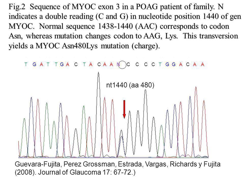 T G A T T G A C T A C A A N C C C C T G G A C A A nt1440 (aa 480) Guevara-Fujita, Perez Grossman, Estrada, Vargas, Richards y Fujita (2008).