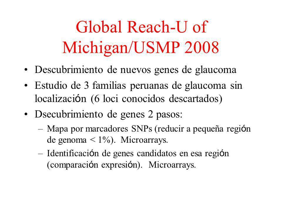 Global Reach-U of Michigan/USMP 2008 Descubrimiento de nuevos genes de glaucoma Estudio de 3 familias peruanas de glaucoma sin localizaci ó n (6 loci conocidos descartados) Dsecubrimiento de genes 2 pasos: –Mapa por marcadores SNPs (reducir a pequeña regi ó n de genoma < 1%).