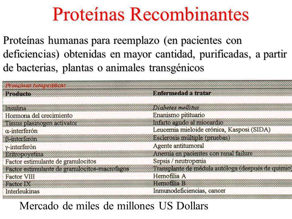 Proteínas Recombinantes Proteínas humanas para reemplazo (en pacientes con deficiencias) obtenidas en mayor cantidad, purificadas, a partir de bacterias, plantas o animales transgénicos Mercado de miles de millones US Dollars