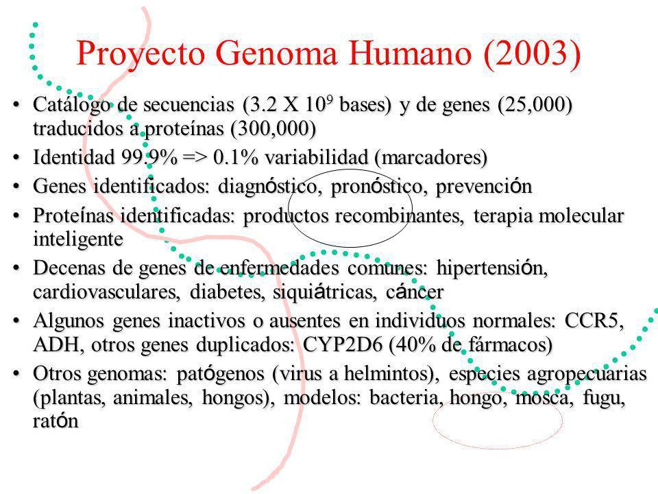 Proyecto Genoma Humano (2003) Catálogo de secuencias (3.2 X 10 9 bases) y de genes (25,000) traducidos a proteínas (300,000)Catálogo de secuencias (3.2 X 10 9 bases) y de genes (25,000) traducidos a proteínas (300,000) Identidad 99.9% => 0.1% variabilidad (marcadores)Identidad 99.9% => 0.1% variabilidad (marcadores) Genes identificados: diagn ó stico, pron ó stico, prevenci ó nGenes identificados: diagn ó stico, pron ó stico, prevenci ó n Prote í nas identificadas: productos recombinantes, terapia molecular inteligenteProte í nas identificadas: productos recombinantes, terapia molecular inteligente Decenas de genes de enfermedades comunes: hipertensi ó n, cardiovasculares, diabetes, siqui á tricas, c á ncerDecenas de genes de enfermedades comunes: hipertensi ó n, cardiovasculares, diabetes, siqui á tricas, c á ncer Algunos genes inactivos o ausentes en individuos normales: CCR5, ADH, otros genes duplicados: CYP2D6 (40% de fármacos)Algunos genes inactivos o ausentes en individuos normales: CCR5, ADH, otros genes duplicados: CYP2D6 (40% de fármacos) Otros genomas: pat ó genos (virus a helmintos), especies agropecuarias (plantas, animales, hongos), modelos: bacteria, hongo, mosca, fugu, rat ó nOtros genomas: pat ó genos (virus a helmintos), especies agropecuarias (plantas, animales, hongos), modelos: bacteria, hongo, mosca, fugu, rat ó n