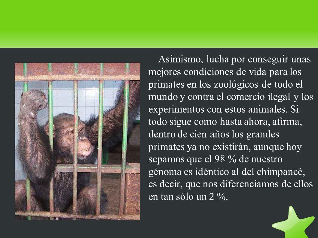 Asimismo, lucha por conseguir unas mejores condiciones de vida para los primates en los zoológicos de todo el mundo y contra el comercio ilegal y los