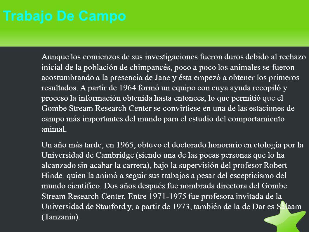 Trabajo De Campo Aunque los comienzos de sus investigaciones fueron duros debido al rechazo inicial de la población de chimpancés, poco a poco los ani