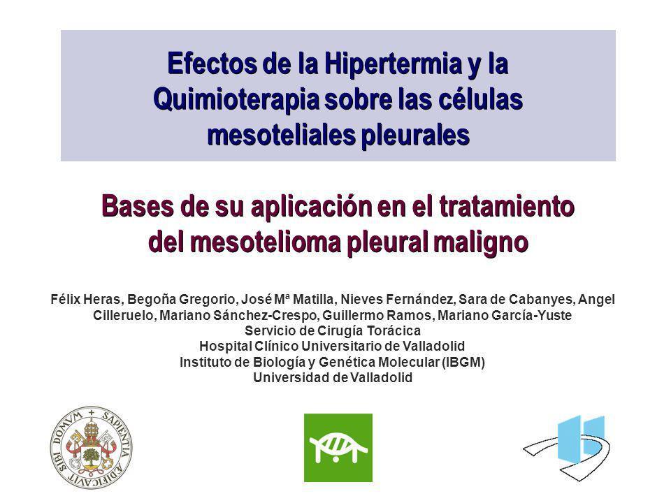 Efectos de la Hipertermia y la Quimioterapia sobre las células mesoteliales pleurales Bases de su aplicación en el tratamiento del mesotelioma pleural