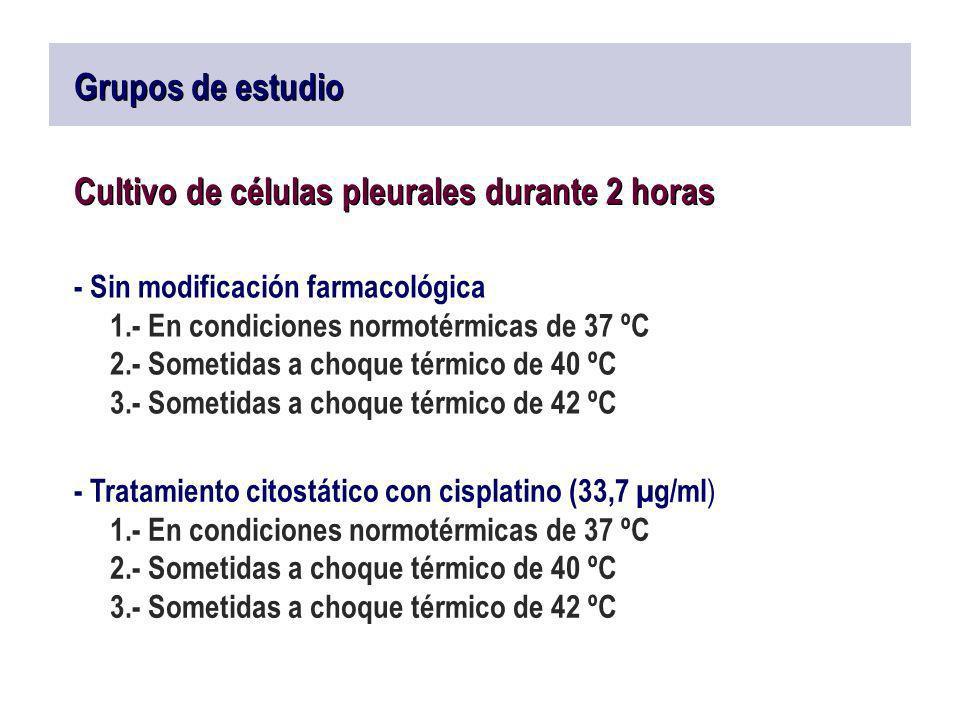 Grupos de estudio Cultivo de células pleurales durante 2 horas - Sin modificación farmacológica 1.- En condiciones normotérmicas de 37 ºC 2.- Sometida