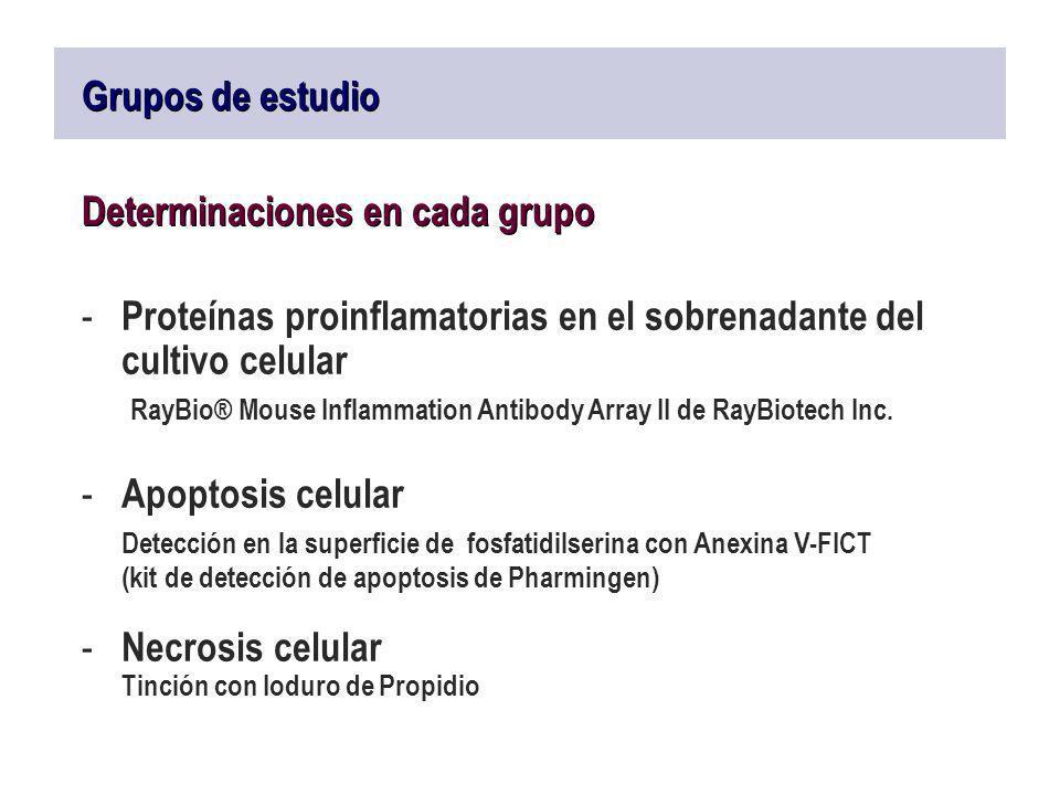 Grupos de estudio Determinaciones en cada grupo - Proteínas proinflamatorias en el sobrenadante del cultivo celular RayBio® Mouse Inflammation Antibod