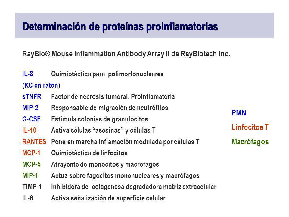 RayBio® Mouse Inflammation Antibody Array II de RayBiotech Inc. IL-8Quimiotáctica para polimorfonucleares (KC en ratón) sTNFRFactor de necrosis tumora