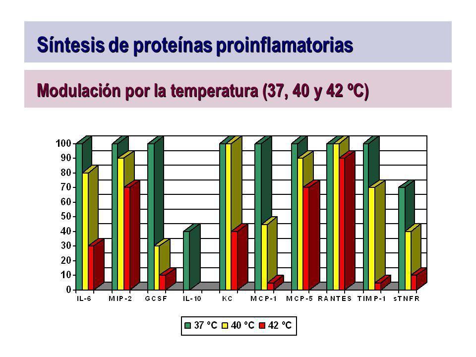 Síntesis de proteínas proinflamatorias Modulación por la temperatura (37, 40 y 42 ºC)