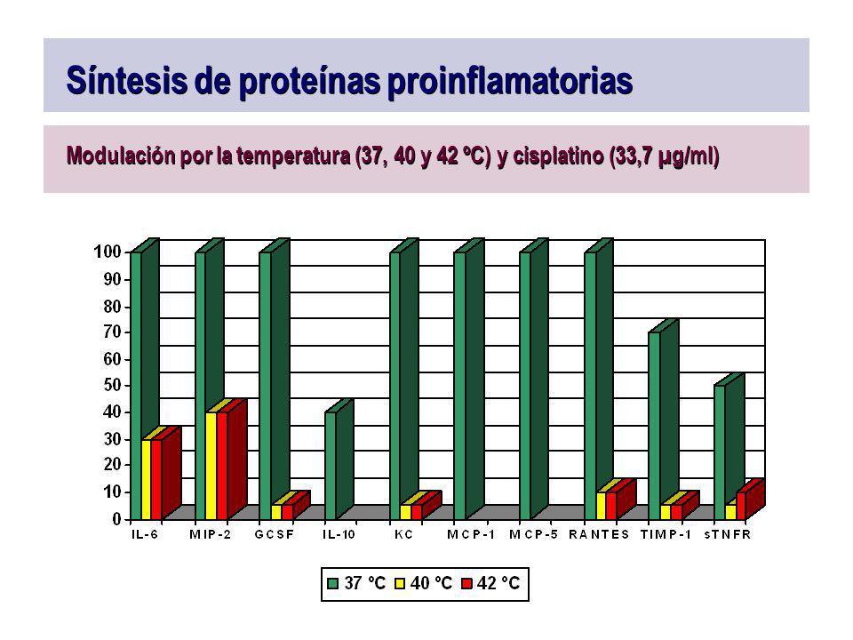 Síntesis de proteínas proinflamatorias Modulación por la temperatura (37, 40 y 42 ºC) y cisplatino (33,7 µg/ml)