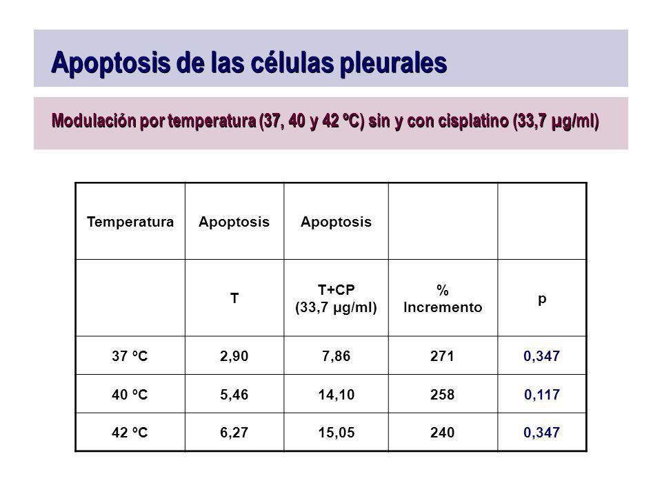 Apoptosis de las células pleurales Modulación por temperatura (37, 40 y 42 ºC) sin y con cisplatino (33,7 µg/ml) TemperaturaApoptosis T T+CP (33,7 μg/